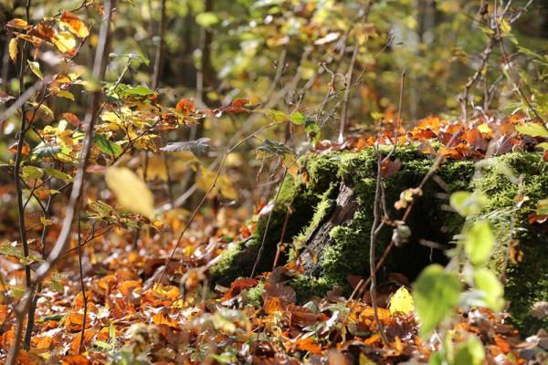 Waldruh Harburg - Bestattungswald