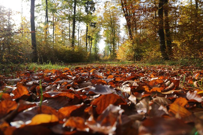 Waldruh Naturbestattung