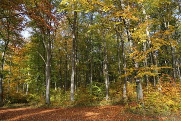 Waldruh Ostalb - Bestattungswald