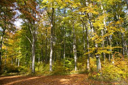 Waldruh Naturbestattung - Leistungen