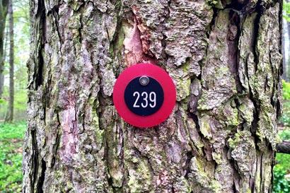Waldruh Naturbestattung - Ruhebaum Rote Plakette