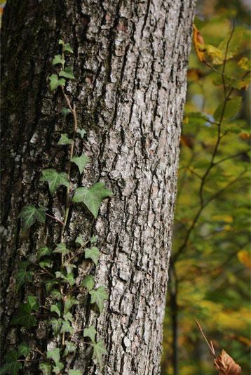 Presse - Waldruh Baum