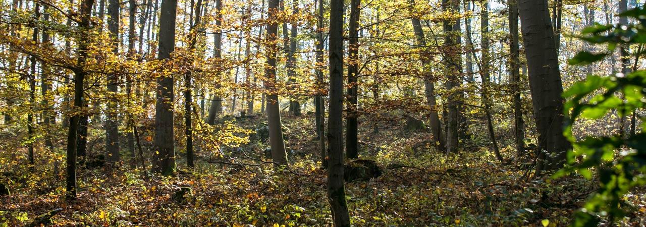 Waldruh Naturbestattung - Waldruh Harburg Bestattungswald