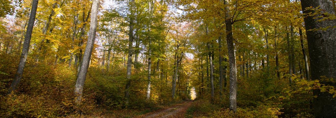Waldruh Naturbestattung - Bestattungswald