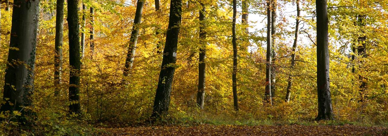 Waldruh Naturbestattung - Waldruh Ostalb Bestattungswald
