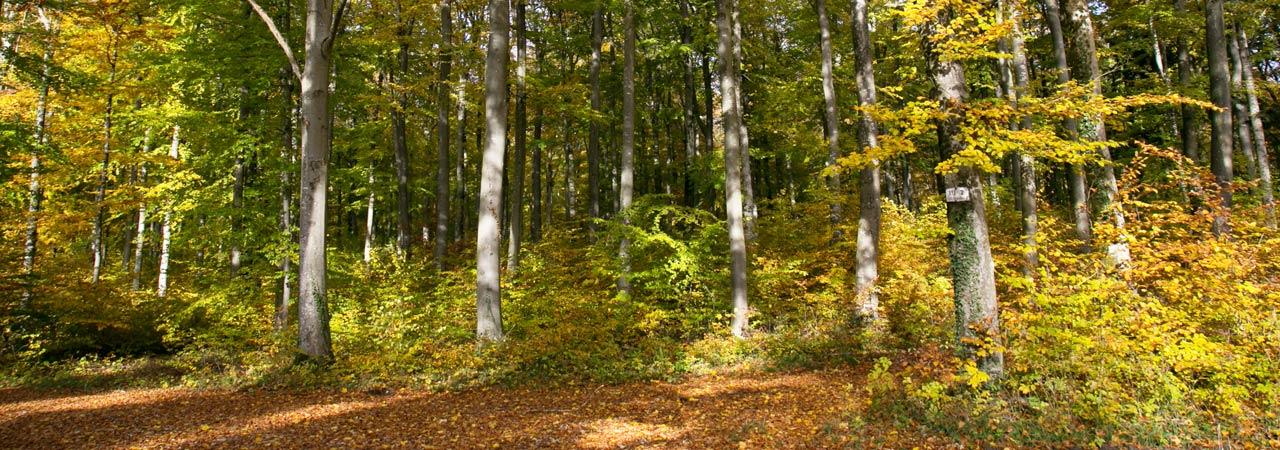 Waldruh Naturbestattungen - Bestattungswald