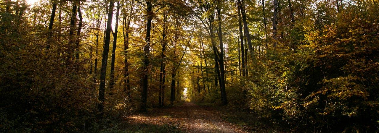 Waldruh Naturbestattung - Lichtung im Bestattungswald