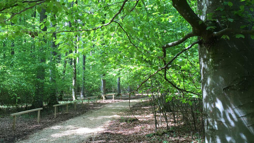 Waldruh Ostalb - Weg zum Andachtsplatz