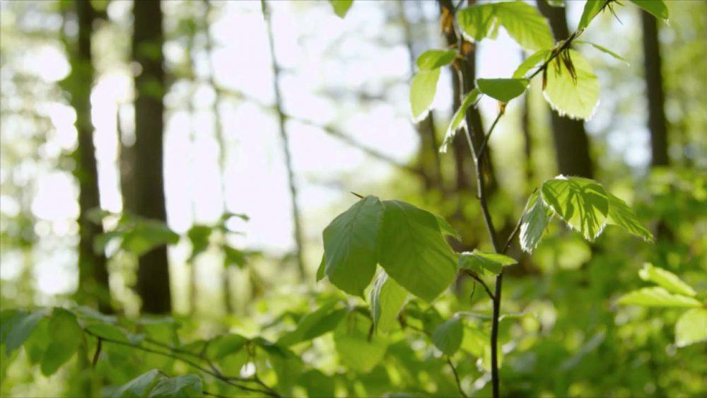 Der Wald Ist Immer Perfekt